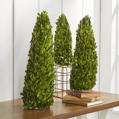 Birch Lane™ Heritage Preserved Boxwood Cone Topiary