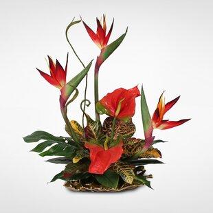 Tropical arrangements wayfair handmade silk bird of paradise and anthurium tropical floral arrangement mightylinksfo