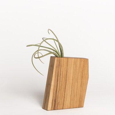 Boyce Studio Wyatt Jr. Air Plant Holder Wood Pot Planter Finish: Hickory