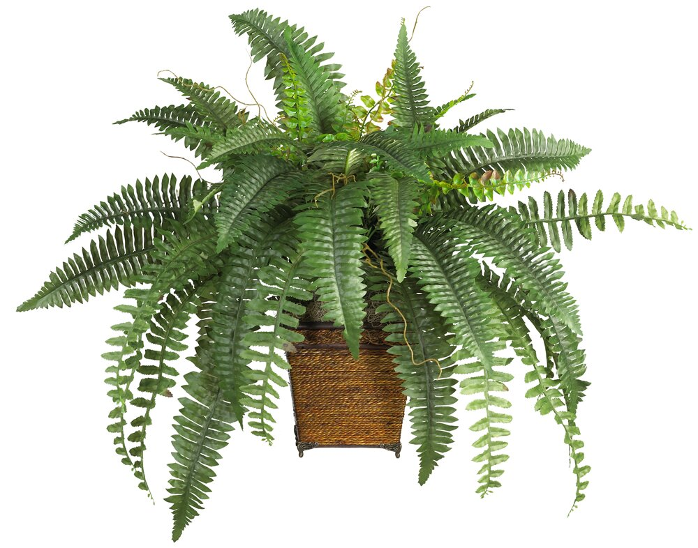 World Menagerie Silk Boston Fern Desk Top Plant with Pot Reviews