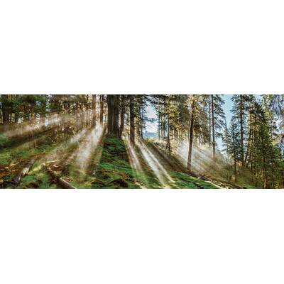 Alcott Hill \'Evergreen Plantation\' Gallery Photographic Print on ...