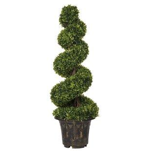 Spiral Floor Moss Topiary in Pot by Aufora Ltd