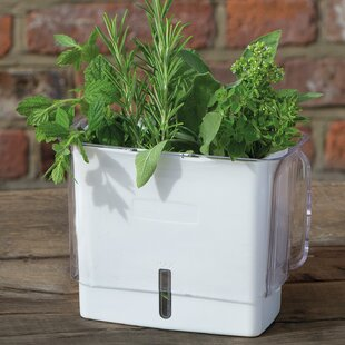Indoor Herb Pots | Wayfair