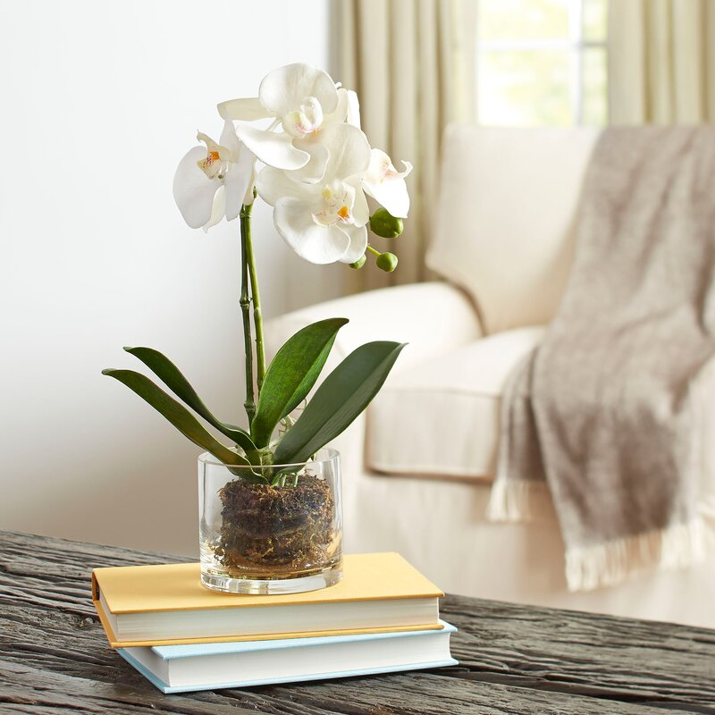 Fantastic Birch Lane™ Faux Orchid in Glass Vase & Reviews | Wayfair VM33