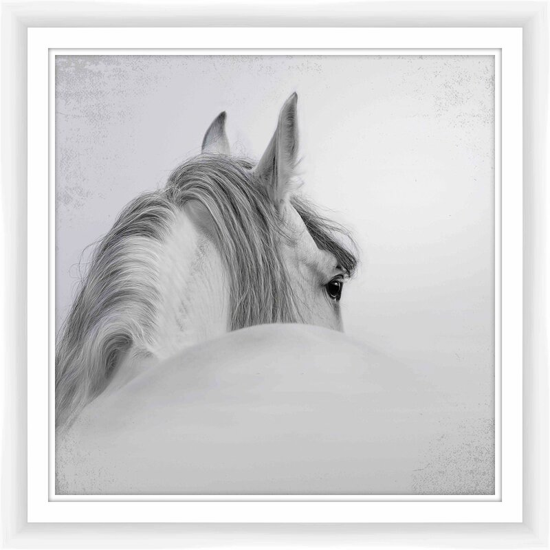 PTM White Horse Framed Photographic Print | Wayfair