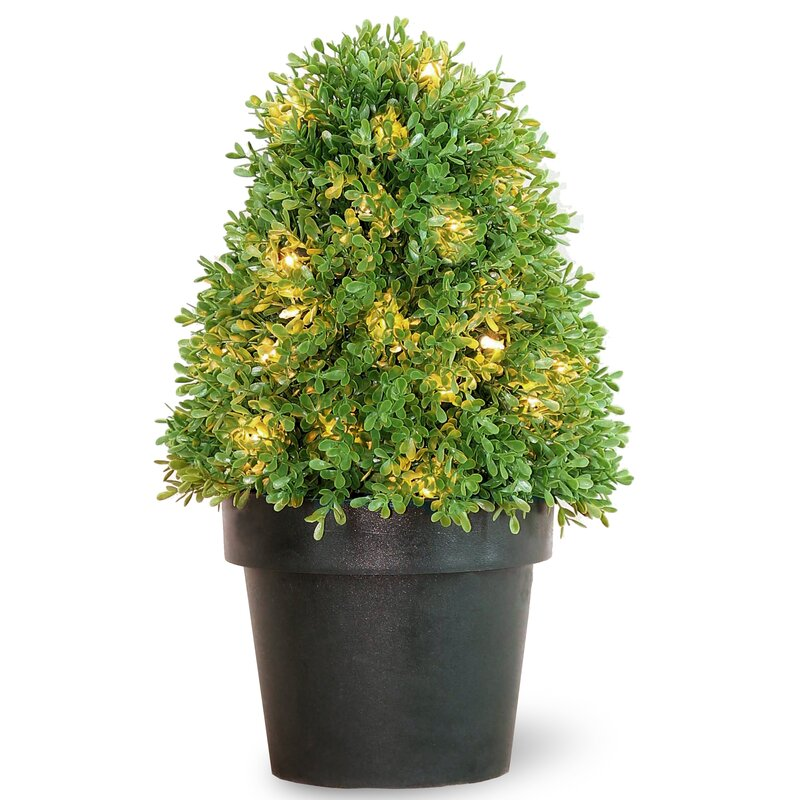 prelit round tapered boxwood topiary in pot