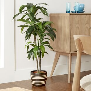 tall potted plants | wayfair Artificial Floor Plants