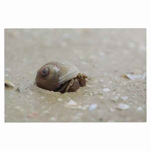 Angie Turner Hermit Crab Photography Doormat