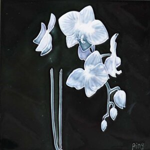 Small White Orchid With Black Background