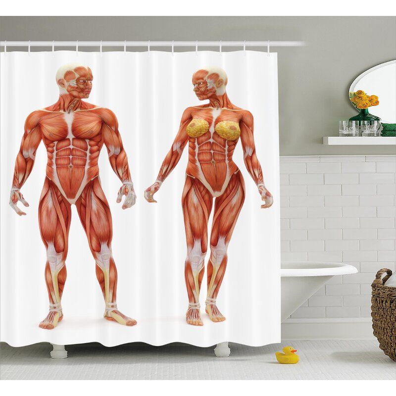 Human Anatomy Male And Female Bodies With Inner Mass Build Display Muscle System Graphic Print Shower