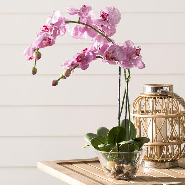 Orchid Glass Vase Wayfair
