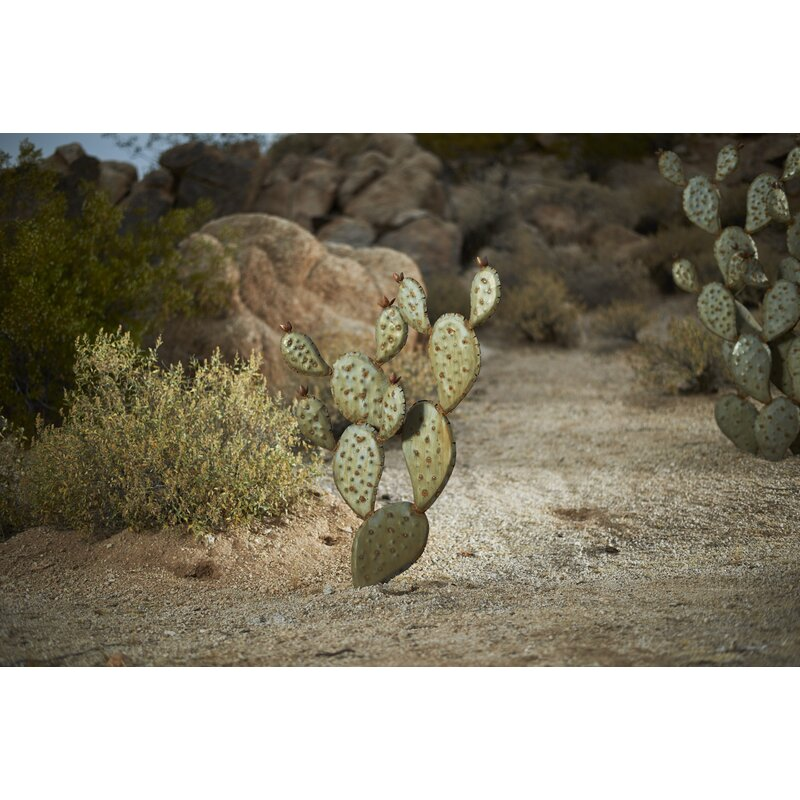 Pictures Of Prickly Pear