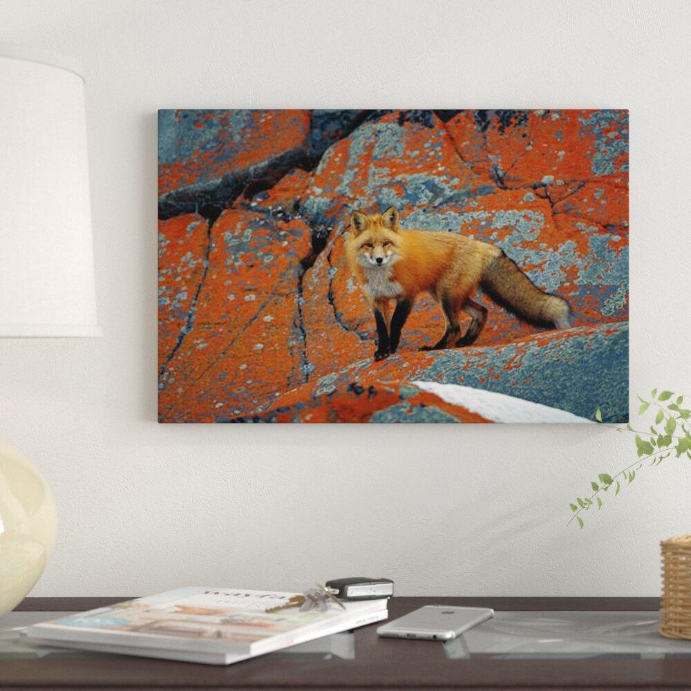 East Urban Home Red Fox On Rocks With Orange Lichen