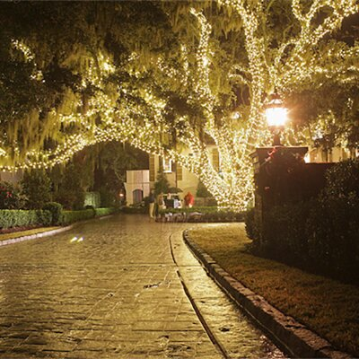 Touch of ECO 225-Light Solar 105 ft. Fairy String Lights & Reviews ...