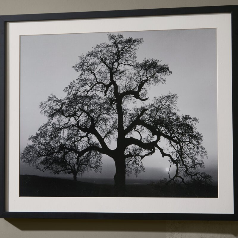 Oak Tree Sunset City California 1962 By Ansel Adams Framed Photographic