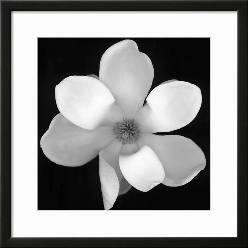 Black and white magnolia flower framed photographic print