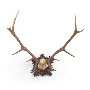 Large Deer Antlers Wall Décor