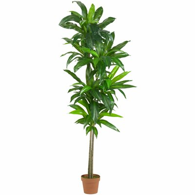 entracing palm tree type house plant. Dracaena Floor Plant in Pot Nearly Natural Silk  Reviews Wayfair