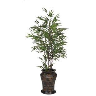 Bamboo Decorative Vase Indoor Plants You\'ll Love | Wayfair