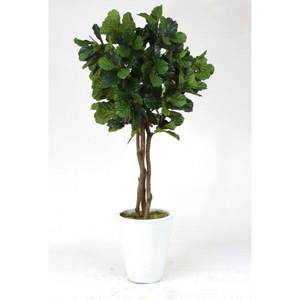 distinctive designs fiddle leaf fig tree in pot reviews wayfair