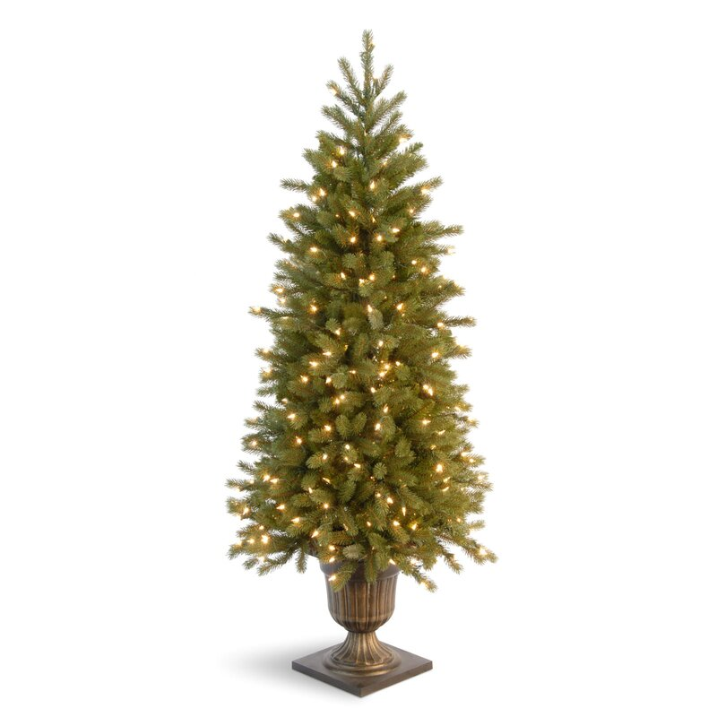 Fraser Fir Christmas Trees: National Tree Co. Jersey Fraser Fir 4' Green Entrance