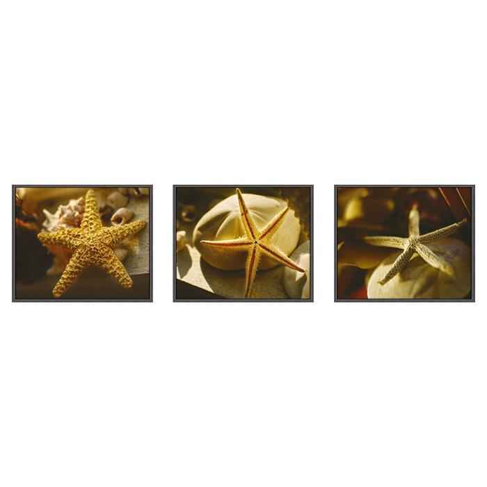 Starfish 3 Piece Framed Photographic Print Set