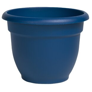 Blue White Planter Pots You Ll Love Wayfair