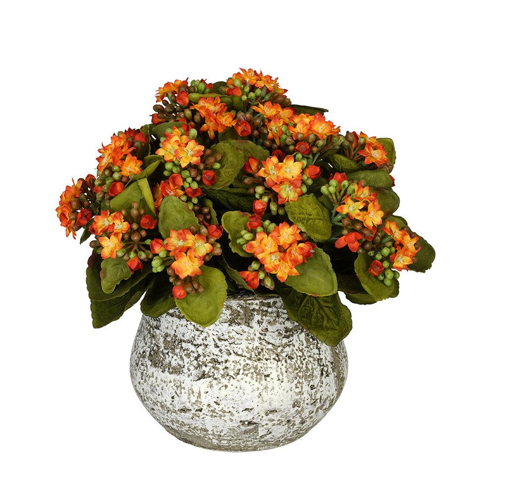 House Of Silk Flowers Artificial Kalanchoe Reviews Wayfair