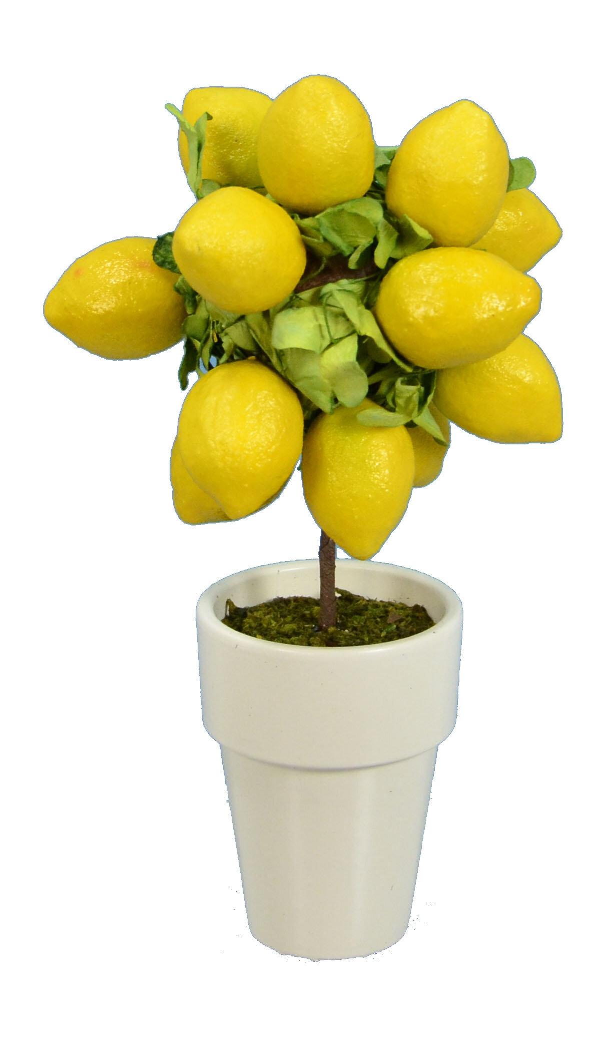 Lemon Round Topiary in Pot & Reviews | Joss & Main