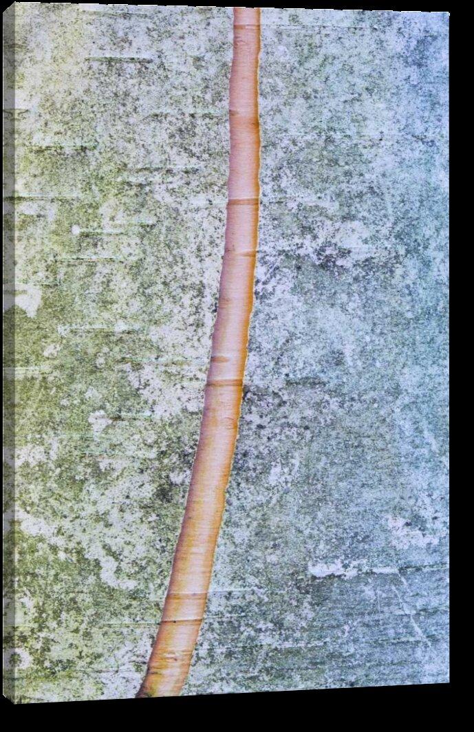 Millwood Pines Canada Quebec Split Paper Birch Bark