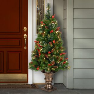 Outdoor Small Christmas Trees Youll Love Wayfair