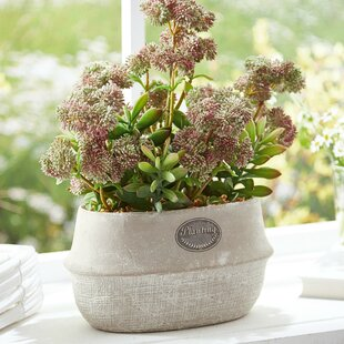 outdoor artificial flowers | wayfair.co.uk Artificial Greenery in Pots