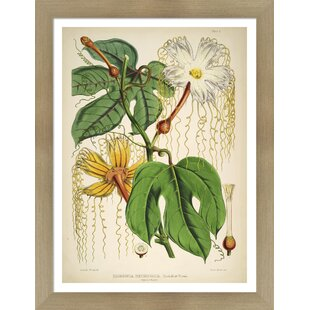 Vintage Botanical Prints | Wayfair
