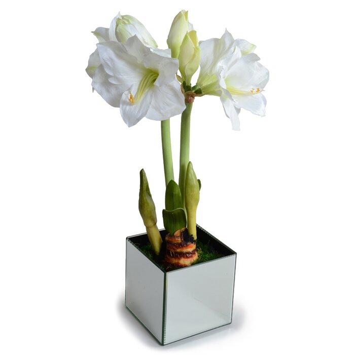 New Growth Designs Faux Amaryllis Plant In Mirror Cube Wayfair