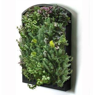 Indoor Living Wall Planter | Wayfair.ca