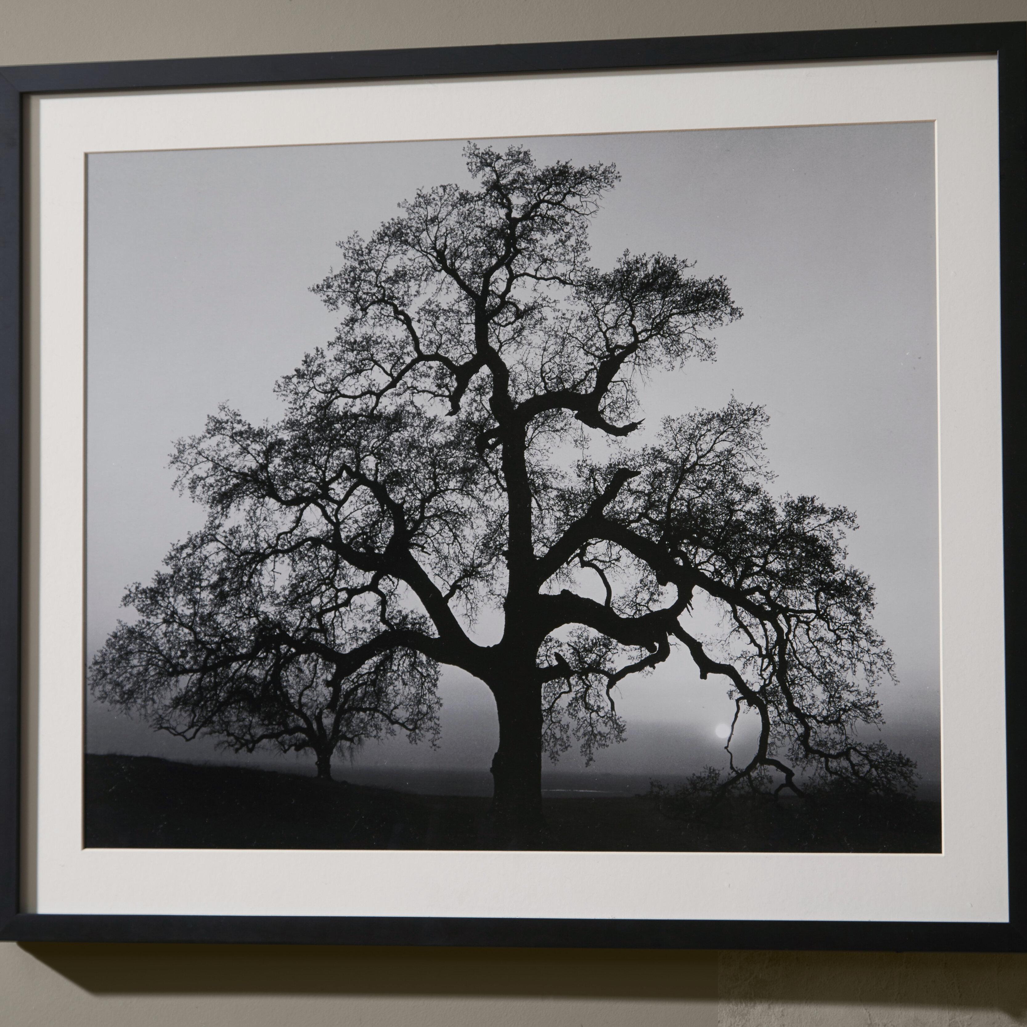 Zipcode Design Oak Tree Sunset City California 1962 By Ansel Adams Framed Photographic Print Reviews Wayfair