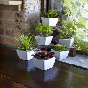 6 Piece Succulent In Pot Set