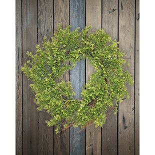 24 Wild Boxwood Wreath