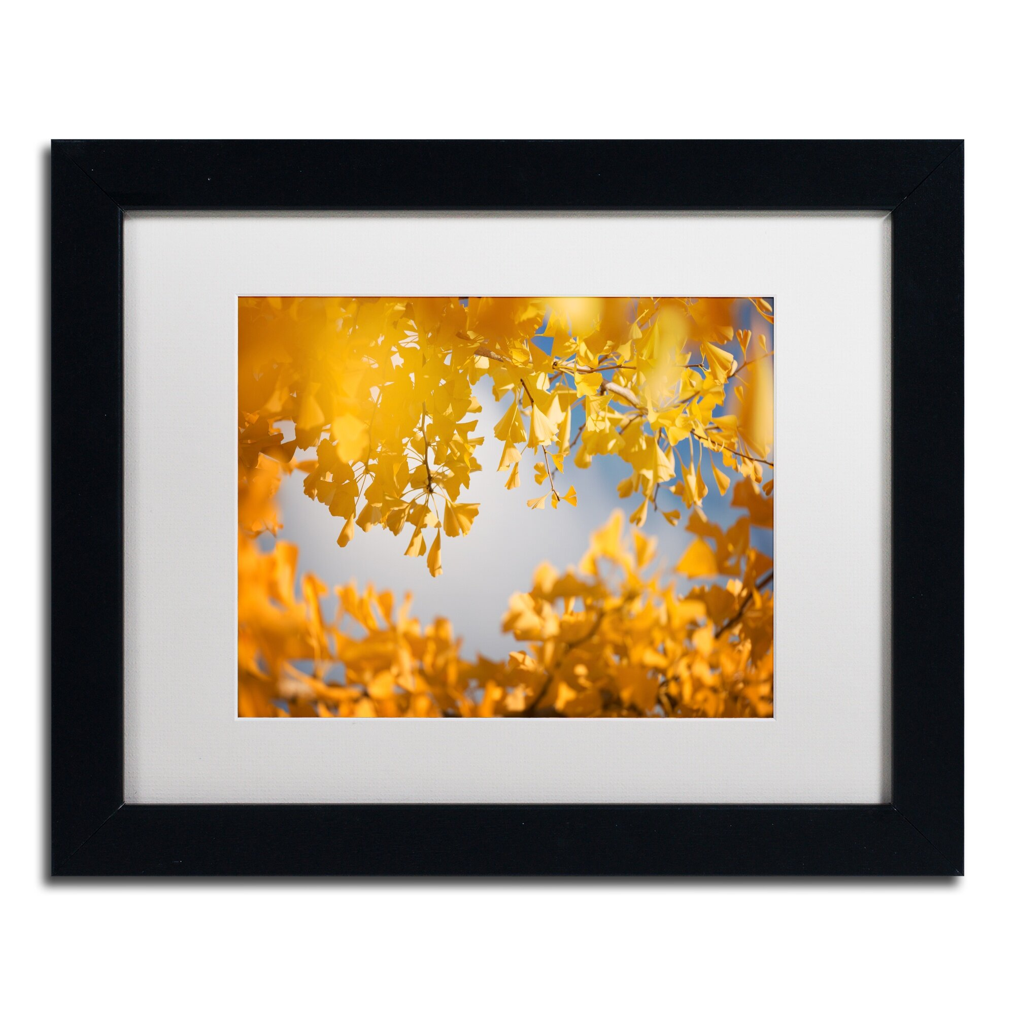 Trademark Art \'Ginkgophytes\' by Philippe Sainte-Laudy Framed ...