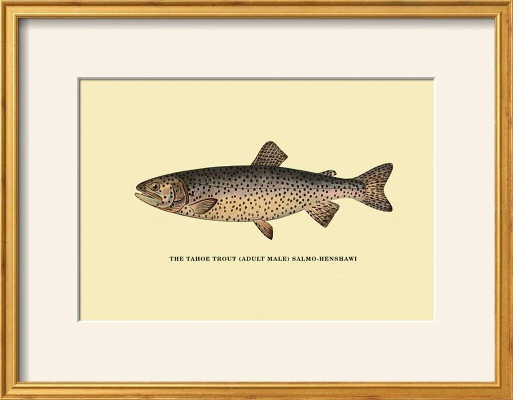 Loon Peak \'The Tahoe Trout\' Framed Graphic Art Print & Reviews | Wayfair