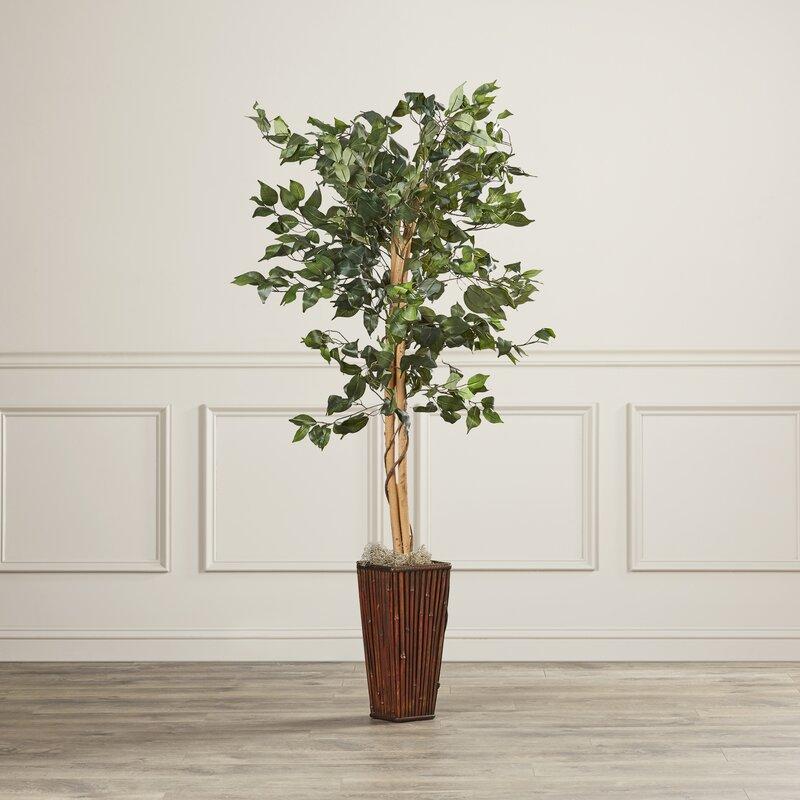 Charlton Home Ficus Tree In Decorative Vase Reviews Wayfair