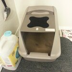 My Cat Is Visiting The Litter Box Frequently