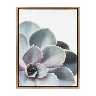 a75f1189555  Sylvie Succulent  Framed Photographic Print on Canvas