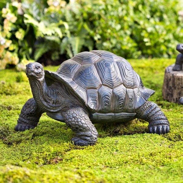 Tortoise | Wayfair