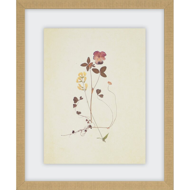 Kitchen Herbarium Art: 'Herbarium' 4 Piece Framed Graphic Art Print Set & Reviews