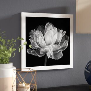 Black and white wall art wayfair tulipa double black and white ii graphic art on rolled canvas mightylinksfo