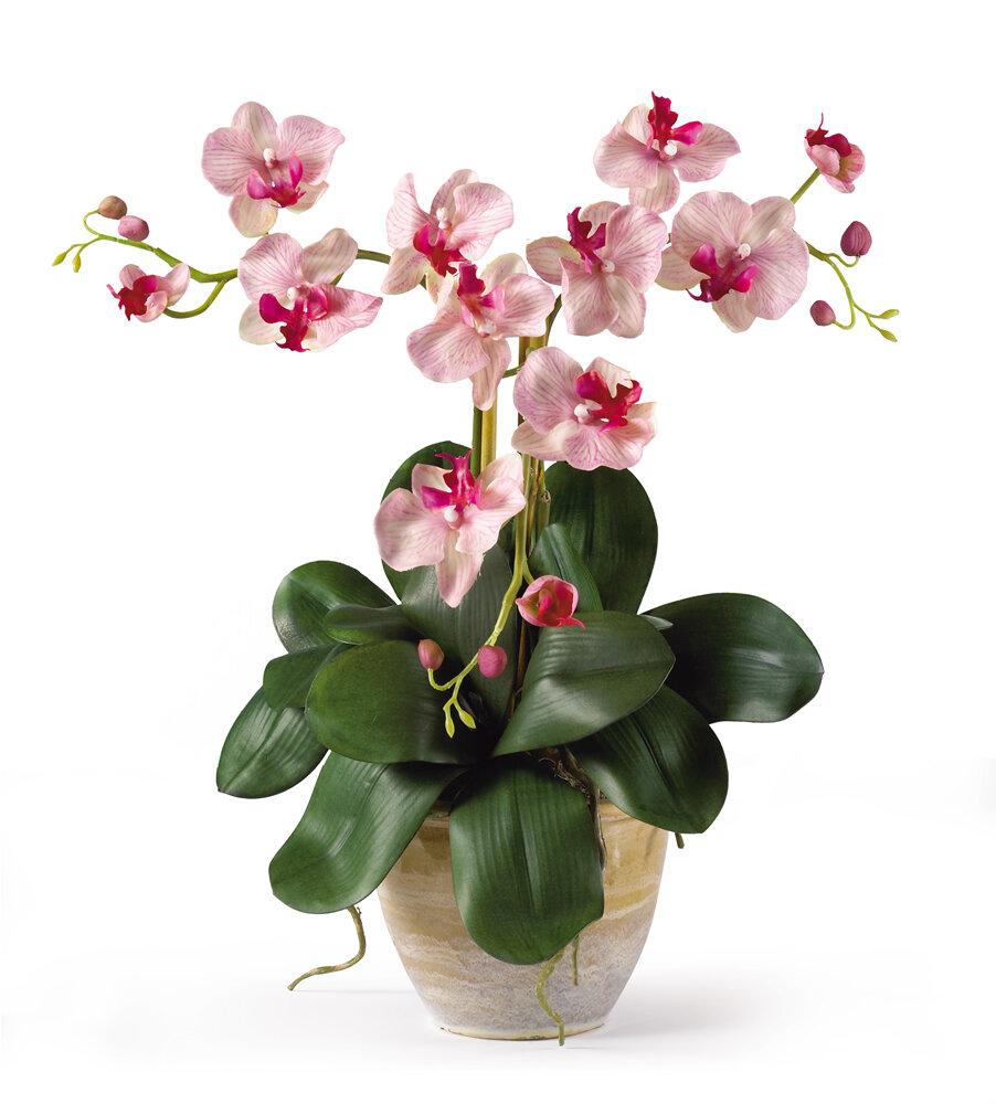 Alcott hill triple mini phalaenopsis silk orchid flowers in pink alcott hill triple mini phalaenopsis silk orchid flowers in pink white reviews wayfair mightylinksfo