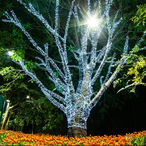 100solar light 398 ft string lights