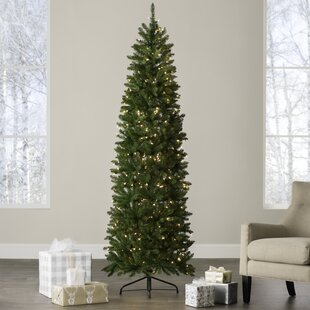 44ba48cec892 Pencil 7.5 Green Fir Artificial Christmas Tree with 350 ClearWhite Lights