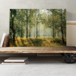 Landscape Forest Woodland View in the Spring Photographic Print on Canvas